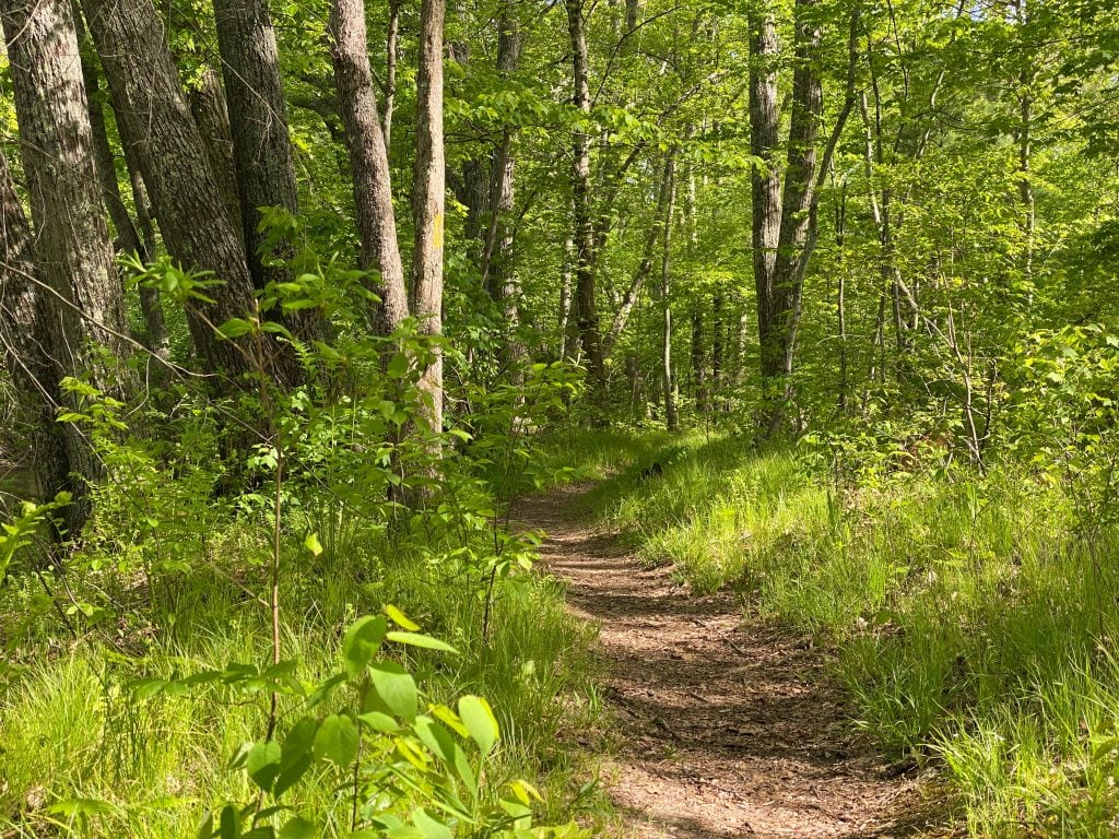 Earthen trail in green grass and forest