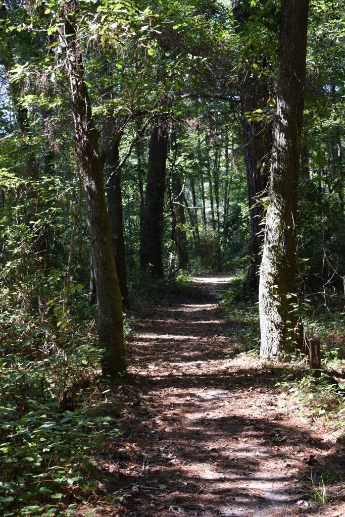 wooded path with greenery
