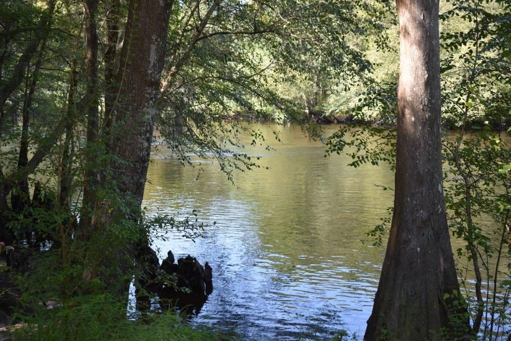 Edisto River seen through two cypress trees