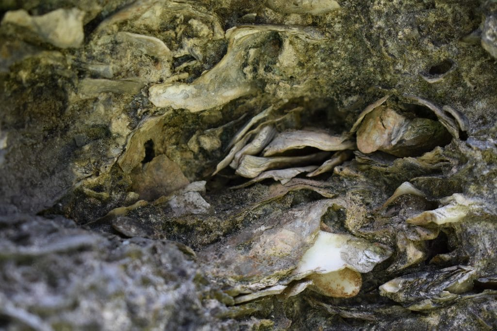 oyster shells in concrete wall