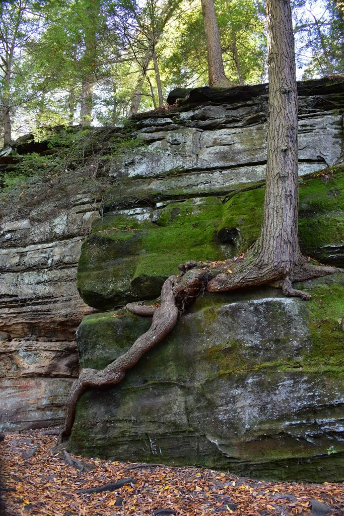 pine tree growing out of rock cliff surrounded by forest