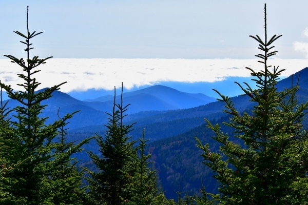 Mountain views above the clouds as seen from the Mt Mitchell summit