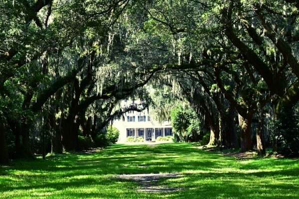 Green grass shaded by dozens of moss covered live oak trees with white Legare Waring House at the end of the tunnel