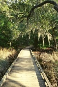 Read more about the article The Complete Guide to Edisto Beach State Park