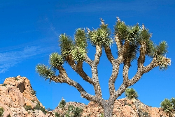 How to Spend an Epic Day at Joshua Tree National Park