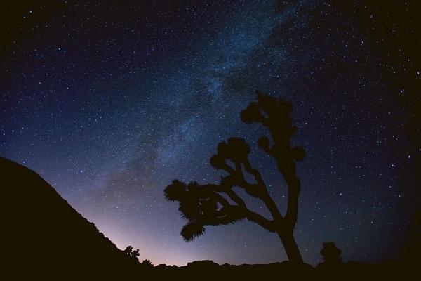 Shadow of a joshua tree against a deep blue starry sky