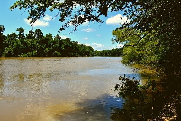 View of the brown Congaree River with a blue summer sky and green tree-lined banks, as seen from the Bates Ferry Trail in Congaree National Park