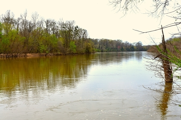 View of the brown Congaree River with an overcast spring sky and tree-lined banks just starting to regrow, as seen from the River Trail in Congaree National Park
