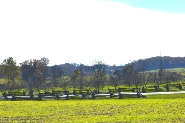 Bare peach trees surrounded by wooden fences and green grass