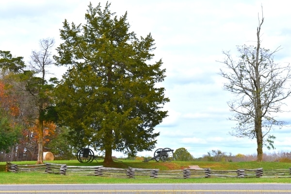 A large pine tree shelters a Civil War cannon and supply cart at Appomattox Court House Battlefield