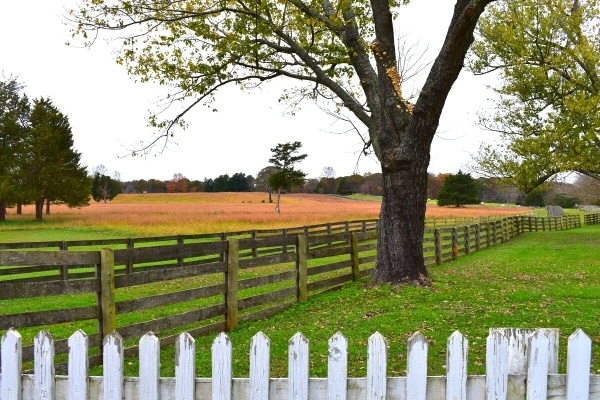 Wheat fields in the fall are surrounded by brown wooden farm fences and a large oak tree