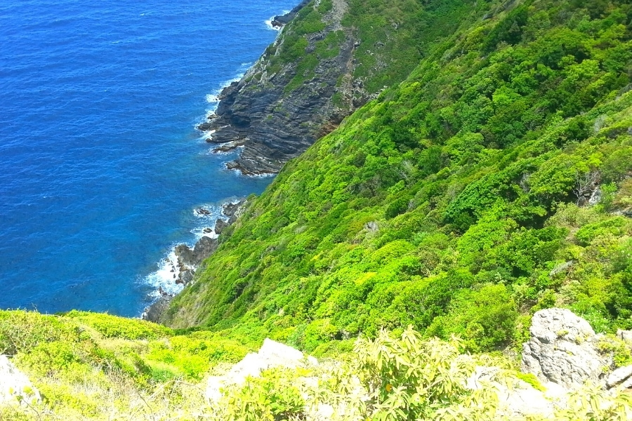 Green forested cliffs of the north shore of St Croix, as seen from Hams Bluff Lighthouse