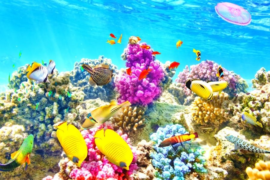 Vibrant colorful fish and reef in clear blue water
