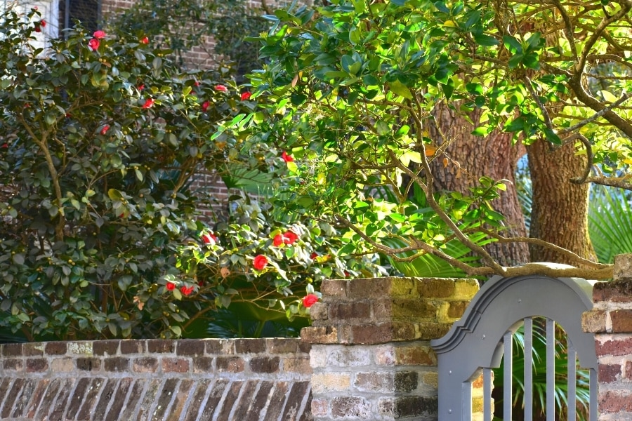 Green leaves with red flowers over a brick wall and wooden curved gate