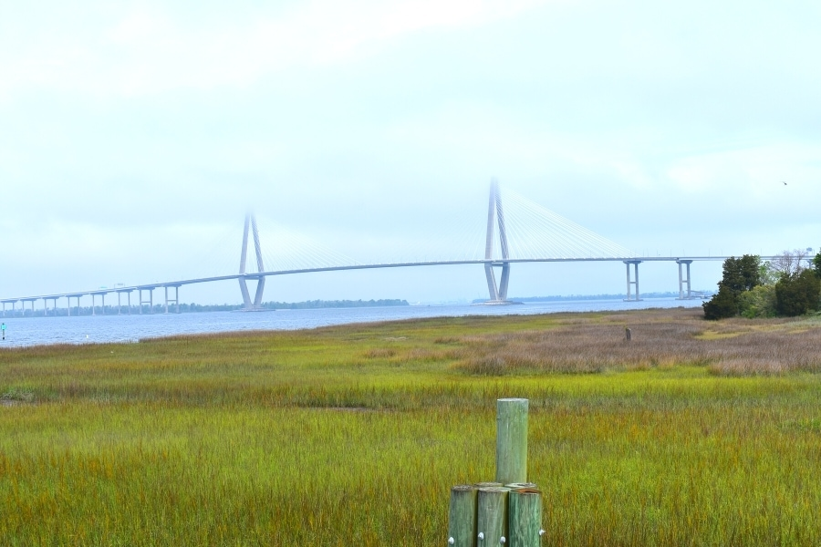Green salt marsh with the Ravenel cable stayed bridge in the background