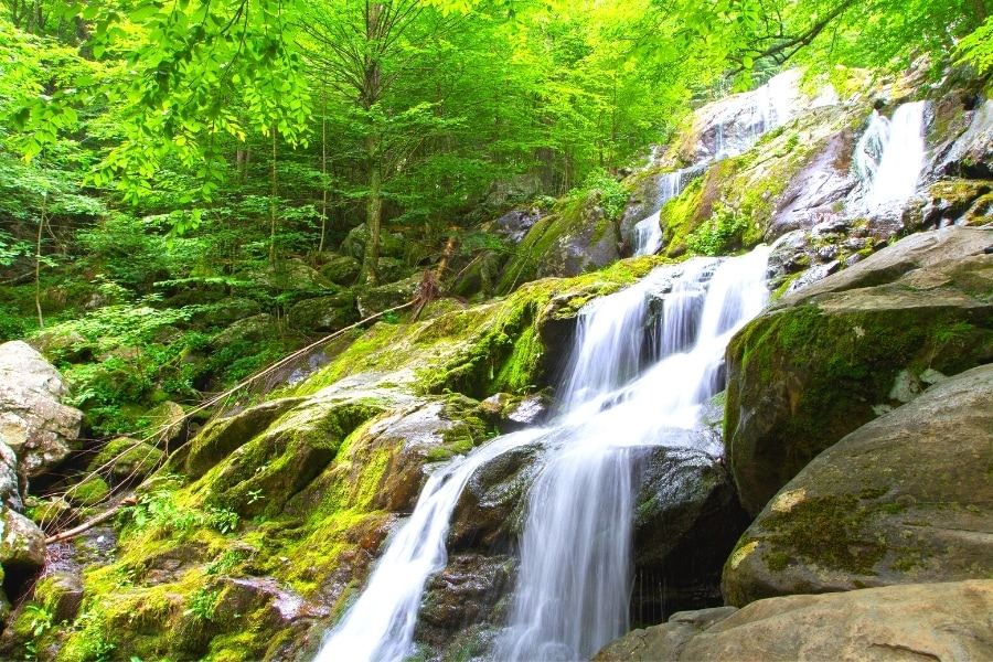 Dark Hollow Falls waterfall cascades down green mossy rocks in a vibrantly green forest in Shenandoah