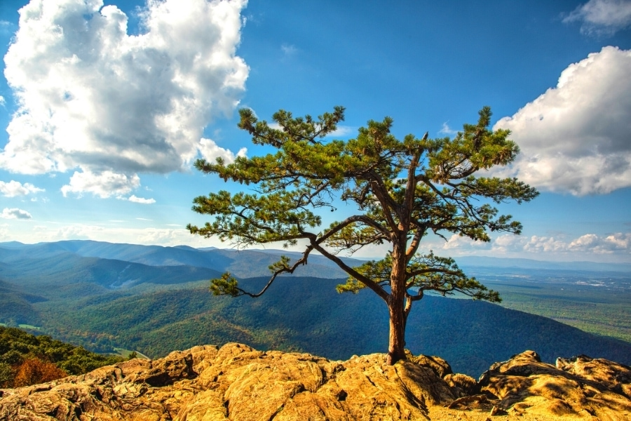 A lone tree in a rocky cliffside stands in front of a blue sky with clouds and a green mountain backdrop